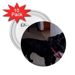 Bouvier Shaved 2 25  Buttons (10 Pack)