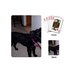 Bouvier Shaved Playing Cards (mini)