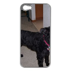 Bouvier Shaved Apple Iphone 5 Case (silver)