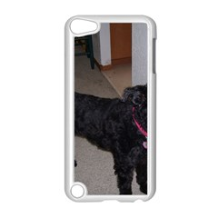 Bouvier Shaved Apple Ipod Touch 5 Case (white)