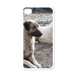 2 Anatolians Apple Iphone 4 Case (white)