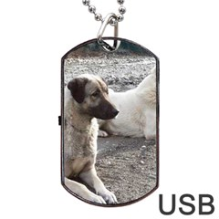 2 Anatolians Dog Tag Usb Flash (two Sides)