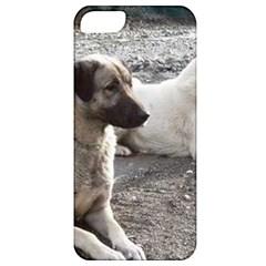 2 Anatolians Apple Iphone 5 Classic Hardshell Case