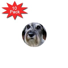 Standard Schnauzer 2 1  Mini Buttons (10 Pack)