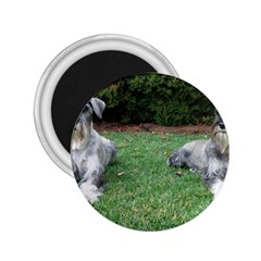 2 Standard Schnauzers 2 25  Magnets