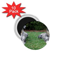 2 Standard Schnauzers 1 75  Magnets (10 Pack)