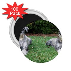 2 Standard Schnauzers 2 25  Magnets (100 Pack)