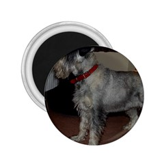 Standard Schnauzer Full 2 25  Magnets