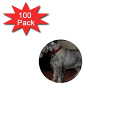 Standard Schnauzer Full 1  Mini Magnets (100 Pack)
