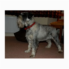 Standard Schnauzer Full Small Glasses Cloth