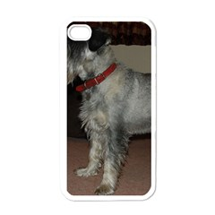 Standard Schnauzer Full Apple Iphone 4 Case (white)