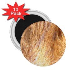 Nova Scotia Duck Tolling Retriever Eyes 2 25  Magnets (10 Pack)