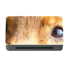 Nova Scotia Duck Tolling Retriever Eyes Memory Card Reader With Cf