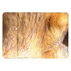 Nova Scotia Duck Tolling Retriever Eyes Samsung Galaxy Tab 8 9  P7300 Flip Case