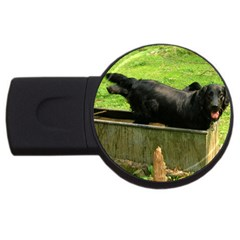 2 Full Flat Coated Retriever Usb Flash Drive Round (4 Gb)