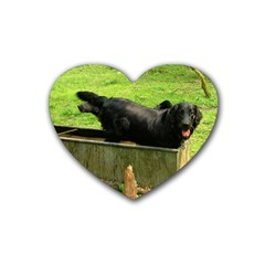 2 Full Flat Coated Retriever Heart Coaster (4 Pack)