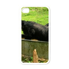 2 Full Flat Coated Retriever Apple Iphone 4 Case (white)