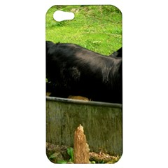 2 Full Flat Coated Retriever Apple Iphone 5 Hardshell Case