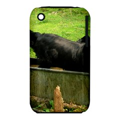 2 Full Flat Coated Retriever Iphone 3s/3gs