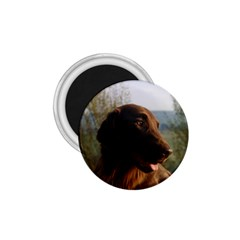 Flat Coated Retriever 1 75  Magnets