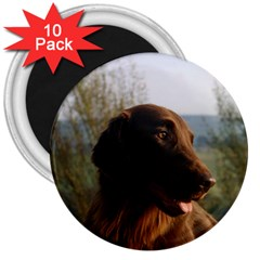 Flat Coated Retriever 3  Magnets (10 Pack)