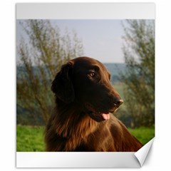 Flat Coated Retriever Canvas 8  X 10