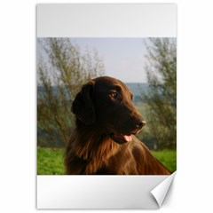 Flat Coated Retriever Canvas 12  X 18