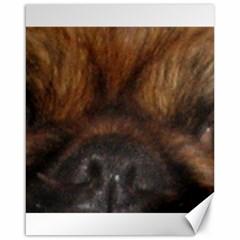 Pekingese Eyes Canvas 16  X 20