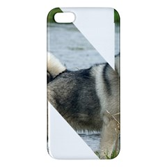 Norwegian Elkhound In Letter Apple Iphone 5 Premium Hardshell Case