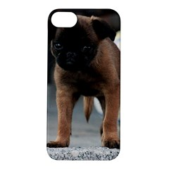 Brussels Griffon Front View Apple Iphone 5s/ Se Hardshell Case
