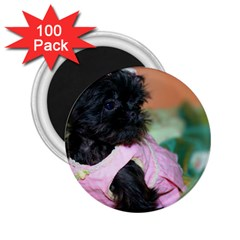 Brussels Griffon Dressed In Pink 2 25  Magnets (100 Pack)
