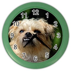 Brussels Griffon Color Wall Clocks