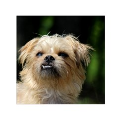 Brussels Griffon Small Satin Scarf (square)