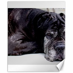 Neapolitan Mastiff Laying Canvas 16  X 20