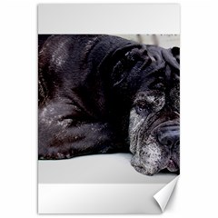 Neapolitan Mastiff Laying Canvas 20  X 30