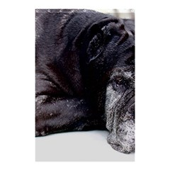 Neapolitan Mastiff Laying Shower Curtain 48  X 72  (small)