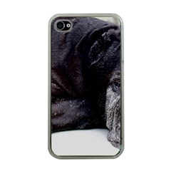 Neapolitan Mastiff Laying Apple Iphone 4 Case (clear)