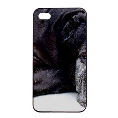 Neapolitan Mastiff Laying Apple Iphone 4/4s Seamless Case (black)