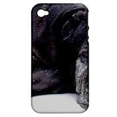 Neapolitan Mastiff Laying Apple Iphone 4/4s Hardshell Case (pc+silicone)
