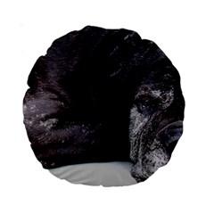 Neapolitan Mastiff Laying Standard 15  Premium Round Cushions