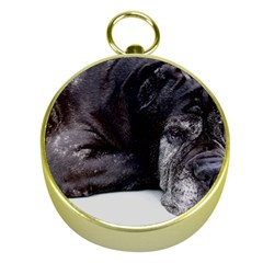 Neapolitan Mastiff Laying Gold Compasses