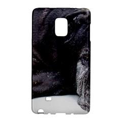 Neapolitan Mastiff Laying Galaxy Note Edge