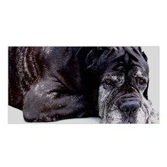 Neapolitan Mastiff Laying Satin Shawl