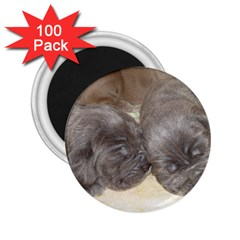 Neapolitan Pups 2 25  Magnets (100 Pack)