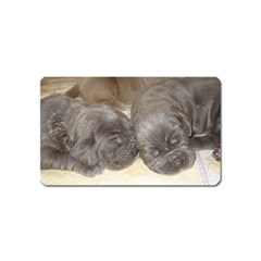 Neapolitan Pups Magnet (name Card)