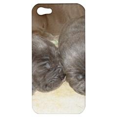 Neapolitan Pups Apple Iphone 5 Hardshell Case