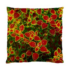 Flower Red Nature Garden Natural Standard Cushion Case (one Side)