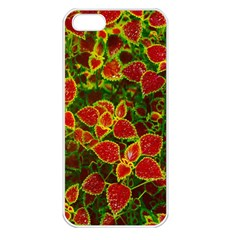 Flower Red Nature Garden Natural Apple Iphone 5 Seamless Case (white)