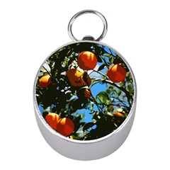 Orange Tree Mini Silver Compasses