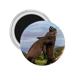 Komodo Dragons Fight 2 25  Magnets